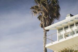 Home With Palm Tree homeowners insurance